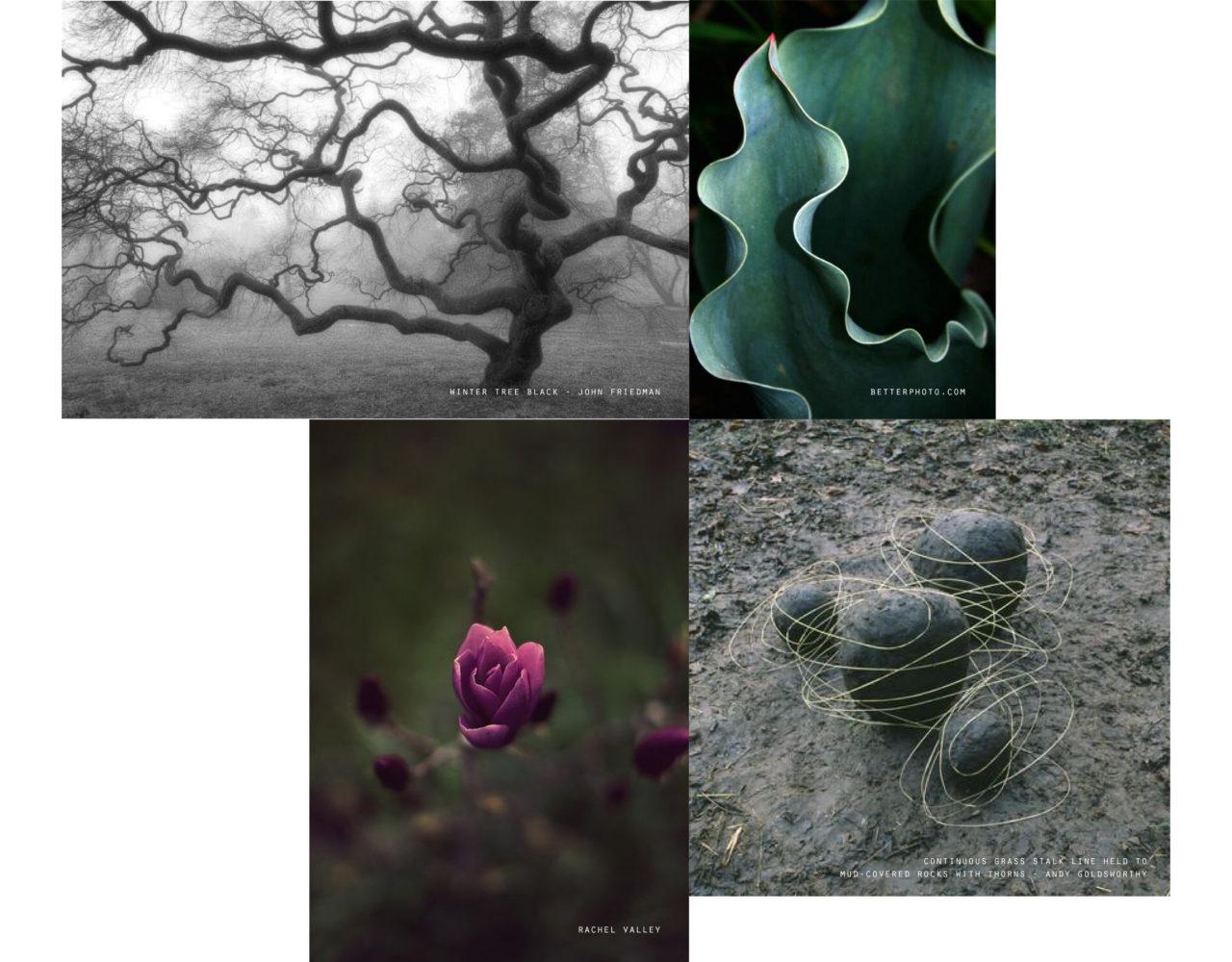 Inspiratie | Natuur
